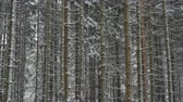 Very strong and beautiful blizzard in the forest. Vídeos