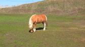 лошадиный : Pony on farm early spring