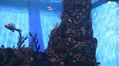 泳ぐ : Large marine fish (in the aquarium, close-up), underwater life