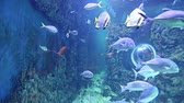 大 : Large marine fish (in the aquarium, close-up), underwater life