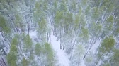 helicopter view : View from height to the winter forest covered with snow Stock Footage