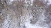 непосредственно над : View from height to the winter forest covered with snow and standing on the river bank Стоковые видеозаписи