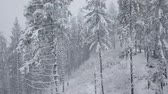 okładka : Flight over snowstorm in a snowy mountain coniferous forest, uncomfortable unfriendly winter weather.
