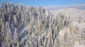 страна чудес : Flight over snowy mountain coniferous forest. Clear sunny frosty weather