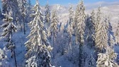 zúzmara : Flight over snowy mountain coniferous forest. Clear sunny frosty weather
