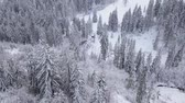 snow covered spruce : Flight over snowy mountain coniferous forest. Clear frosty weather Stock Footage