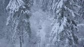 snow covered spruce : Flight over snowstorm in a snowy mountain coniferous forest, uncomfortable unfriendly winter weather.