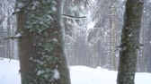 snow covered spruce : Snowstorm in a snowy mountain coniferous forest, uncomfortable unfriendly winter weather.