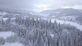 страна чудес : Flight over snowy mountain coniferous forest. Clear frosty weather Стоковые видеозаписи