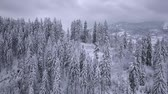 zúzmara : Flight over snowy mountain coniferous forest. Overcast frosty weather