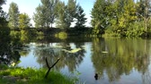 Украина : Time lapse view of the river in a clear sunny summer day and reflection of trees in the water. Ukraine Стоковые видеозаписи