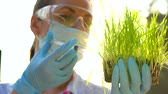 agricultura : Woman agronomist in goggles and a mask examines a sample of soil and plants
