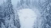 Украина : Flight over snowstorm in a snowy mountain coniferous forest, uncomfortable unfriendly winter weather.