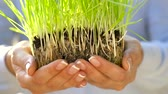небольшой : Female hands hold out handful of soil with green grass. Concept of growth, care, sustainability, protecting the earth, ecology and green environment Стоковые видеозаписи