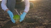 agricultura : Female farmer puts a seedling prototype in the ground