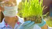 agricultura : Woman scientist in goggles and a mask examines a sample of soil and plants