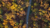 amarelo : Aerial view on car driving through autumn forest road. Scenic autumn landscape Stock Footage