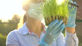 çim : Woman scientist in goggles and a mask examines a sample of soil and plants through a magnifying glass Stok Video