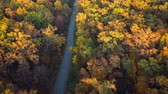logistika : Aerial view on car driving through autumn forest road. Scenic autumn landscape Dostupné videozáznamy