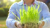 agricultura : Female hands hold out handful of soil with green grass. Concept of growth, care, sustainability, protecting the earth, ecology and green environment Stock Footage