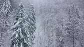 coberto : Flight over snowstorm in a snowy mountain coniferous forest, foggy unfriendly winter weather. Vídeos