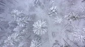Украина : Flight over snowstorm in a snowy mountain coniferous forest, foggy unfriendly winter weather. Стоковые видеозаписи