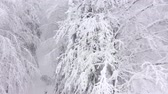 Украина : Aerial view of snow covered trees in the mountains in winter Стоковые видеозаписи