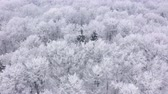 snow covered spruce : Aerial view of fairy snow covered trees in winter