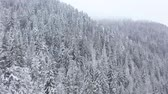 Украина : Flight over snowstorm in a snowy mountain coniferous forest, foggy unfriendly winter weather. Accelerated video Стоковые видеозаписи