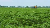 The Protection Of Plants.Tractor Spraying A Green Potato Field. Slow motion Wideo