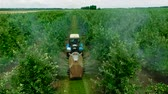 Blue tractor Rides through a Green Apple orchard spraying Fungicides Protecting Apples from Pests