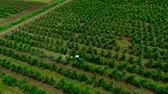 pesticide : Aerial view of the Sprayer for Applying Fungicides in the Apple Orchard.Crop Protection. Stock Footage