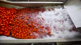 autoclave : Automatic line for the canning industry.Preserving Vegetables. Washing Tomatoes.