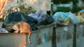 abandonar : homeless hungry cat in garbage bins