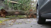 storm : Fallen tree trunk  by strong wind on city street blocking cars movement