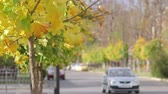 line : Car on quiet city street in the fall Stock Footage