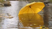autumn : Lost umbrella floating on water in fall