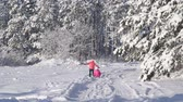 tobogganing : Mother pulling child on sled through snow in winter forest Stock Footage