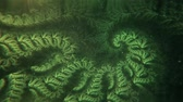 intuition : Beautiful Abstract Green Fractal Spiral Slowly Morphing and Turning Stock Footage