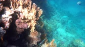 borboleta : Coral reef (cay) of the Red Sea with a variety of fish. 4K video.
