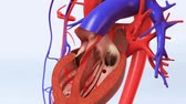 maladie cardiaque : blood flow and clotting