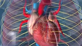 nervoso : heartbeat and nervous system