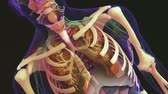 internal : The Respiratory System Stock Footage