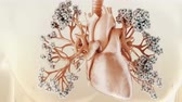 polmoni : The circulatory and respiratory systems work together to circulate blood and oxygen throughout the body.