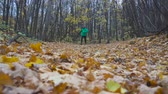 fitness : Man jogging cross country running on trail in forest. Training and exercising outdoors when cross country running in inspirational autumn landscape. Sports Motivation. Stock Footage