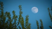 luar : Full moon in the evening sky behind foliage of tree Stock Footage
