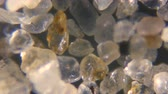 shale : Sand from the sea under the microscope. Stock Footage