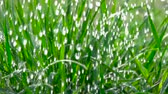 Rain water drops falling over green grass. Water rain drop for fresh nature Closeup. Slow motion. Water drops falling on green leaves. Close up. Drops of on the grass. Stock Footage