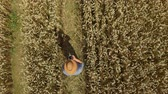 milharal : Zoom Man Hat in Young Wheat Field and Examining Crop. Aerial View Directly Above a Farmer Monitoring His Wheat With Tablet. Wheat Field Farmer Landscape Nature Agriculture Growth Drone Footage Man. Vídeos