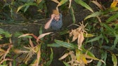 milharal : Zoom Man Hat in Young Corn Field and Examining Crop. Aerial View Directly Above a Farmer Monitoring His Corn With. Corn Field Farmer Landscape Nature Agriculture Growth Drone Footage Man.